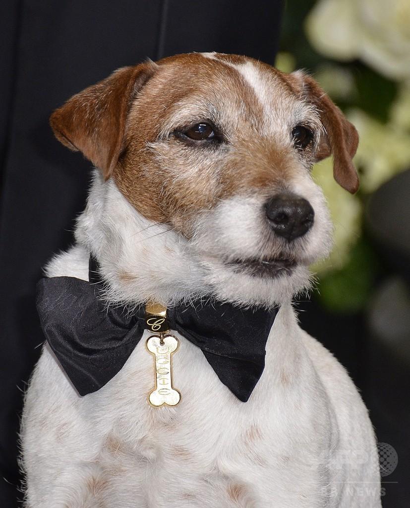 名優犬アギー、安楽死 『アーティスト』で一躍人気者に