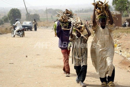 ナイジェリアの森林は12年後に全消滅、専門家が警告