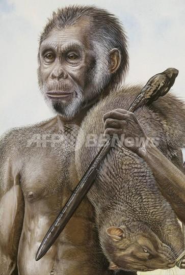 「ホビット」はヒトの新種、米英の研究者が論文で指摘