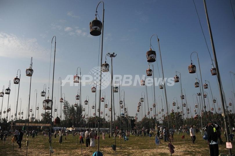 鳥かごがずらり、タイ南部で「鳴き合わせ」大会