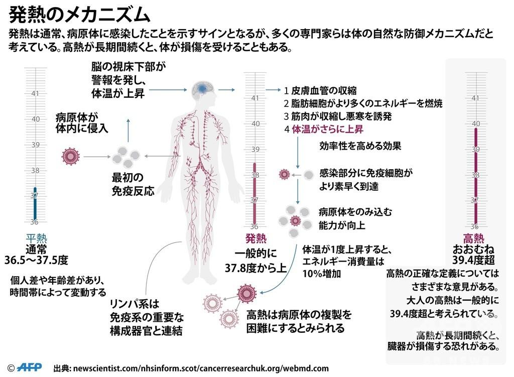【図解】発熱の仕組み、体の自然な防御メカニズム