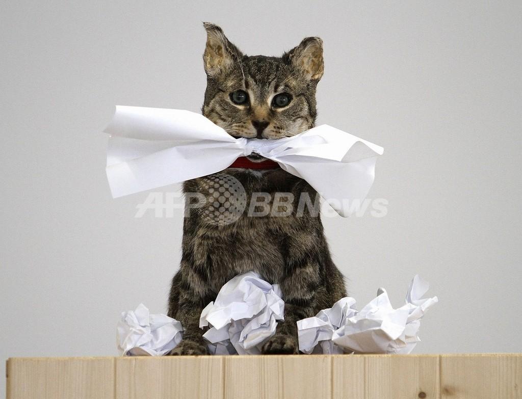 ネコをごみ箱に捨てた女性を起訴、英国