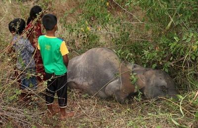 ゾウ4頭死ぬ、旅客列車と衝突 スリランカ