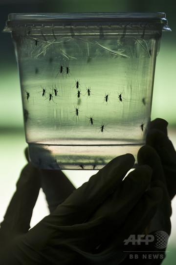 米フロリダのジカ感染9人に、「衛生緊急事態」を宣言