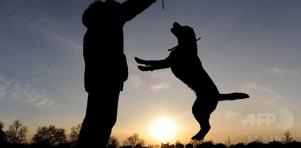 DNAでイヌのふん対策、英ロンドン