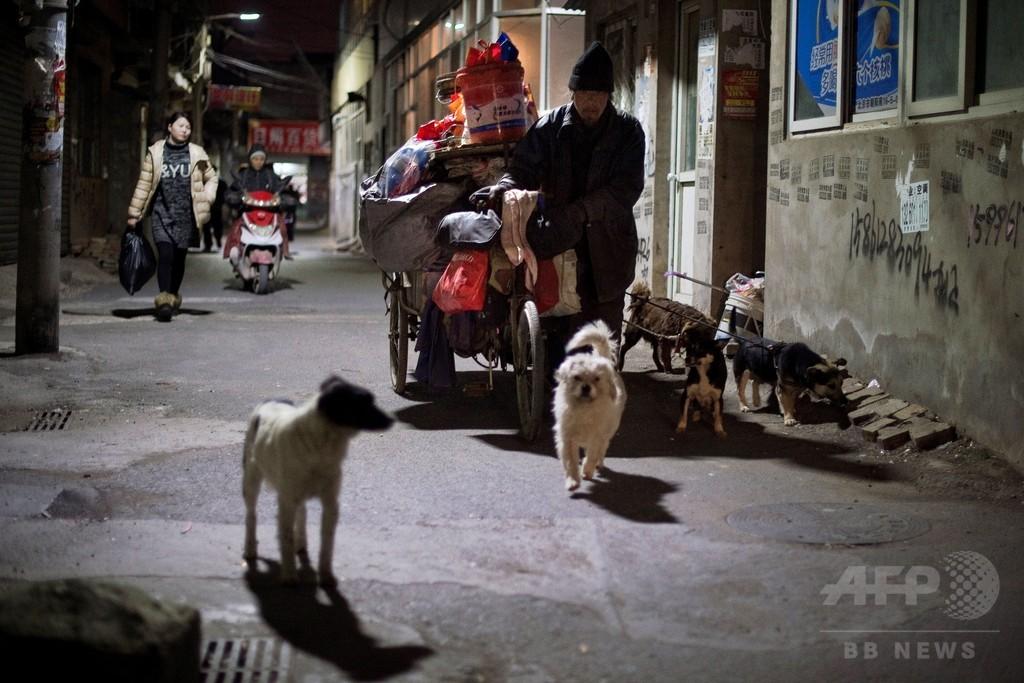 中国の犯罪組織、犬を即死させる注射器販売 ペット狙って食用に