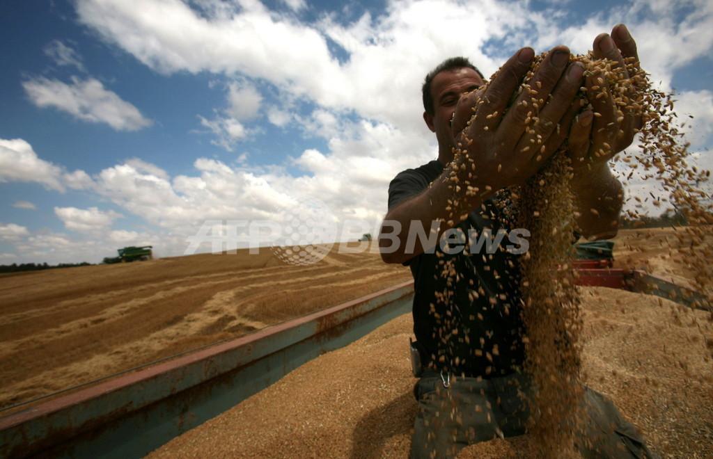 国連顧問、食糧危機は先進国の20年の無策が原因と苦言