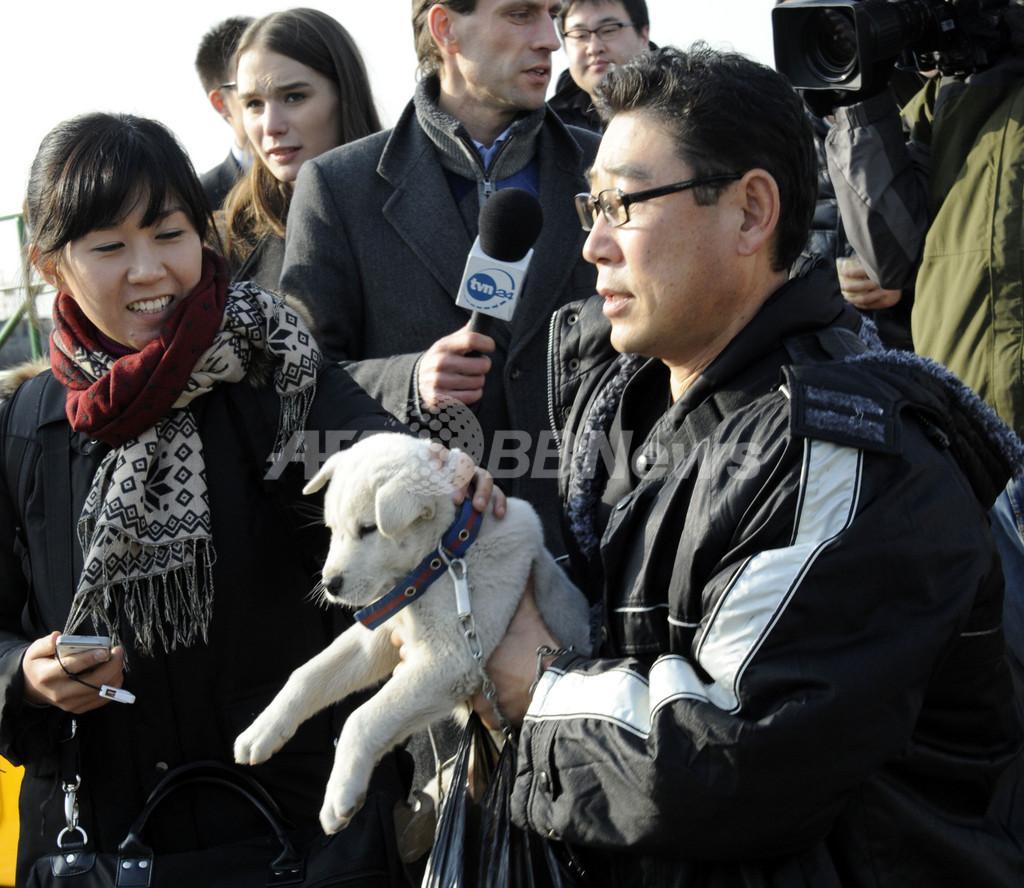 延坪島に残されたペットたち、動物愛護団体が救出訴える 韓国