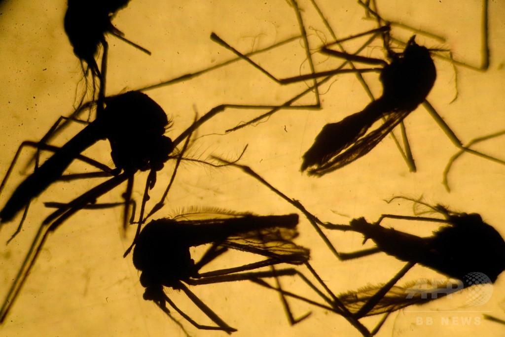 ジカウイルス、脊髄炎に「関連」 症例報告