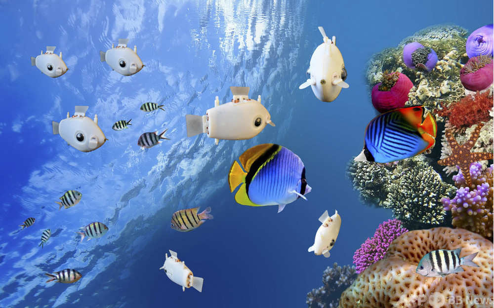本物そっくりに群れで泳ぐ魚ロボット 米大学が開発