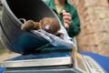 木にぶら下がるのはいつ? 生後1か月のナマケモノの赤ちゃん 独