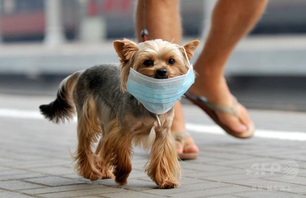 受動喫煙、ペットに悪影響 英研究
