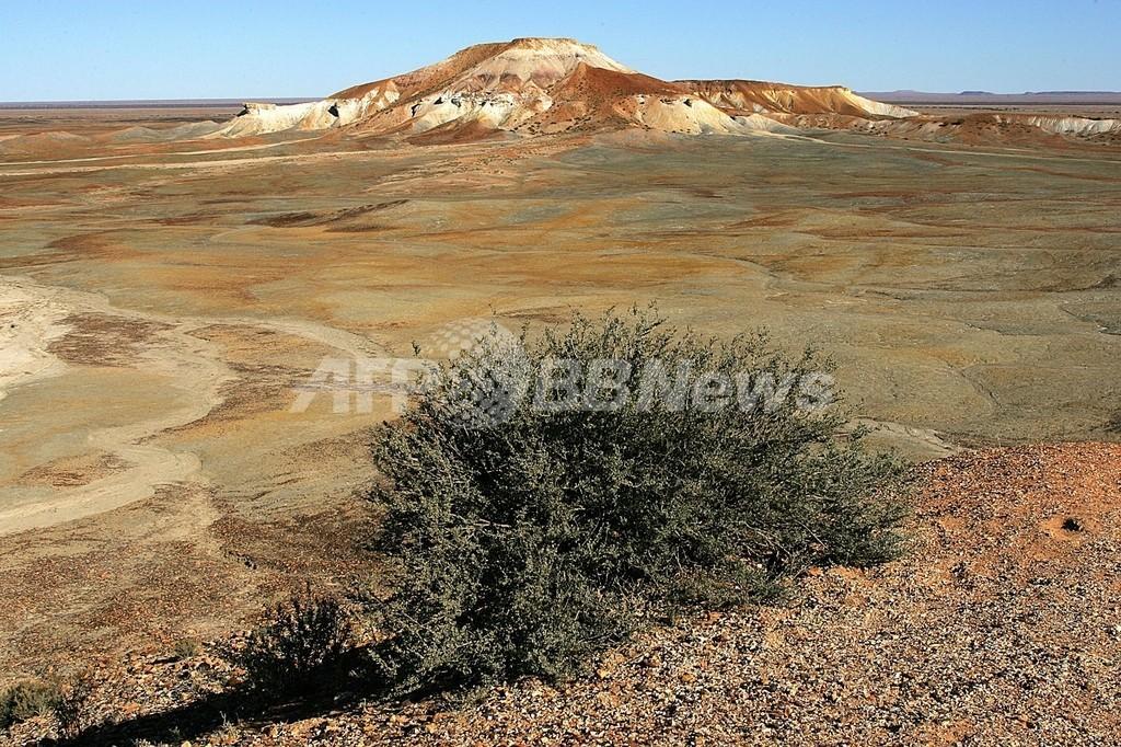 害虫駆除業者、シロアリに救われる オーストラリア