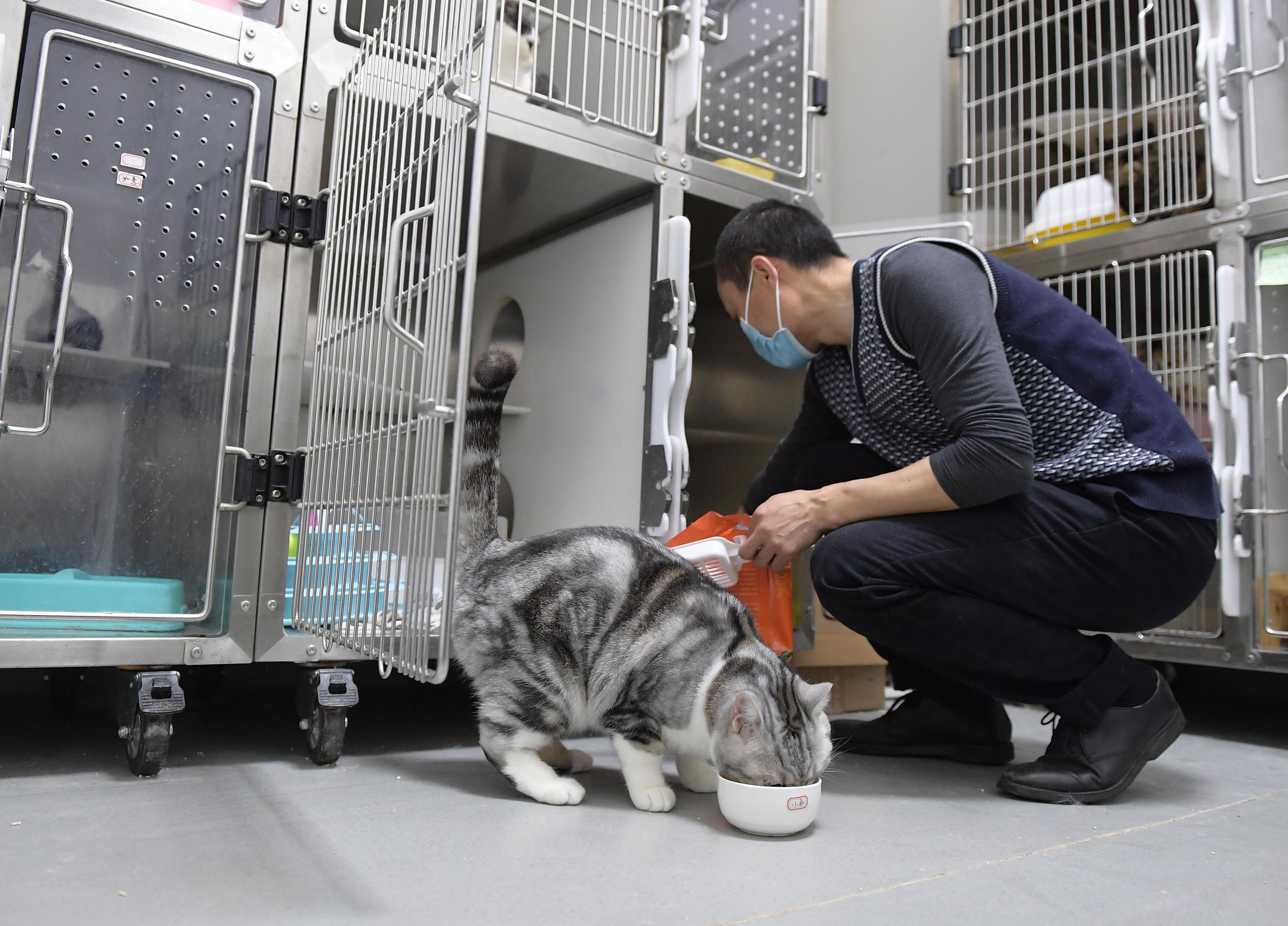 飼い主と会えなくなるペットを守り続ける獣医師 中国・武漢市