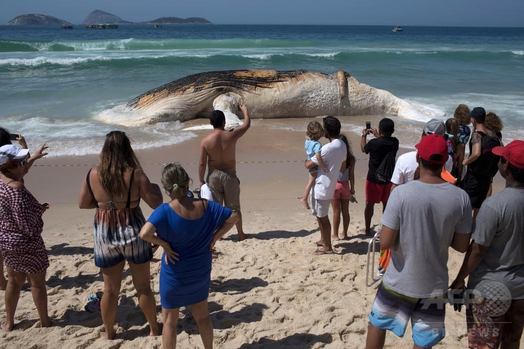 海水浴客ら仰天、リオ人気ビーチに14メートルのクジラ打ち上げられる