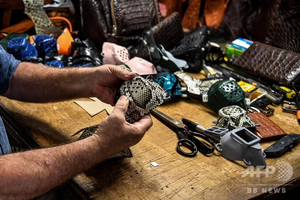 ニシキヘビの革製マスク、ウイルスと外来種を同時に撃退? 米フロリダ