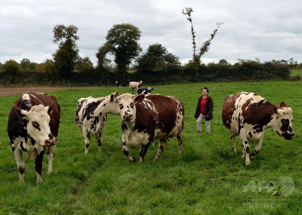 メタン排出する牛のげっぷを抑制、仏農場の温暖化対策