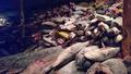 中国船をガラパゴス諸島沖で拿捕 船内から魚300トン エクアドル