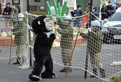 「ゆるゴリラ」が脱走?上野動物園で捕獲訓練
