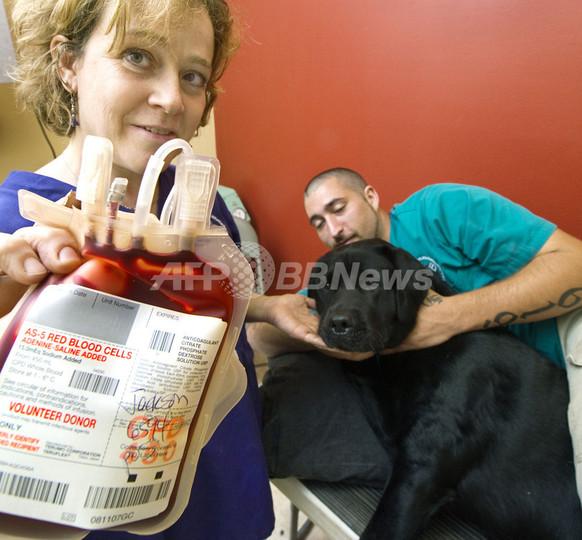 「助けになりたい」ワンちゃんも献血、米メリーランド