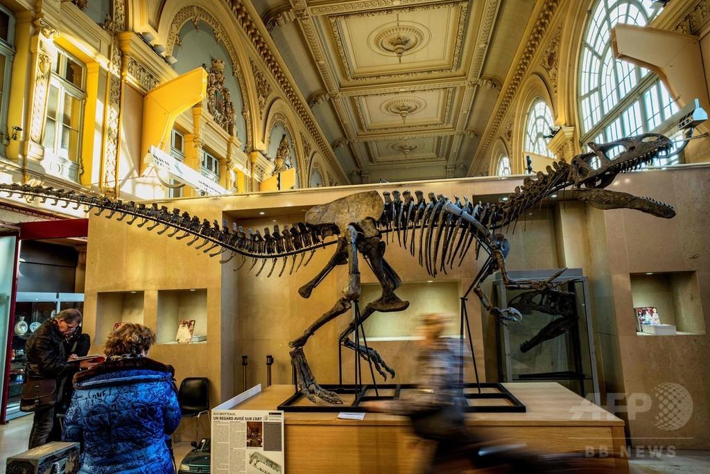 「アロサウルス」の骨格標本、1億3000万円で落札 仏競売
