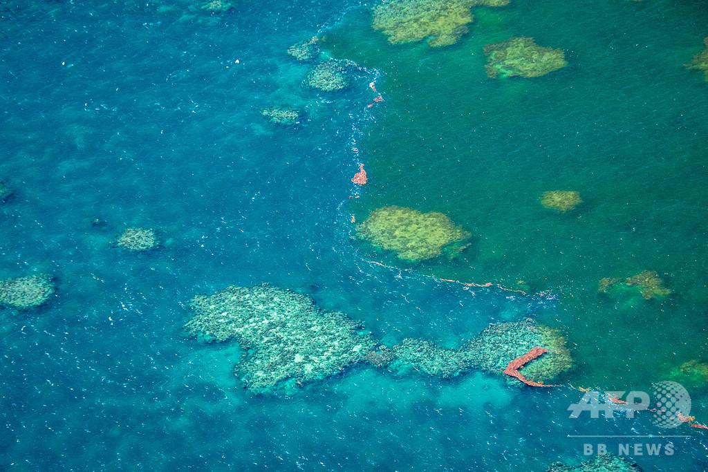 豪洪水でグレートバリアリーフも被害、サンゴ「窒息死」の恐れ