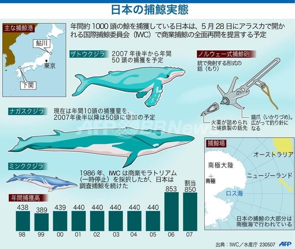日本のホエール・ウォッチング第一人者、「人とクジラの共生」を願う