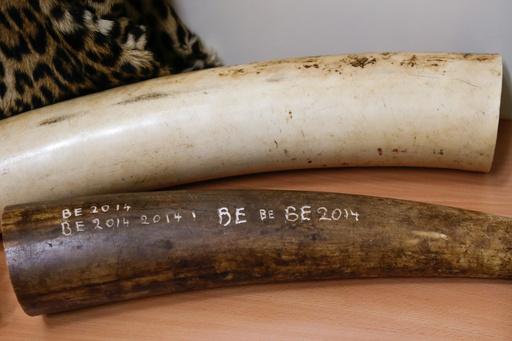 NZ当局、アンティークピアノから象牙剥がし批判浴びる
