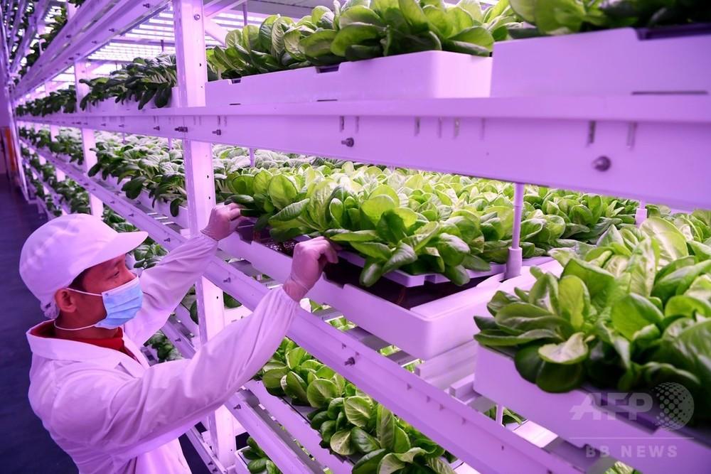 土壌も太陽光も不要の野菜工場 福建