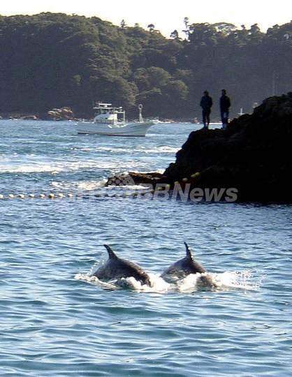 イルカ漁の太地町に「クジラ牧場」構想、和歌山県