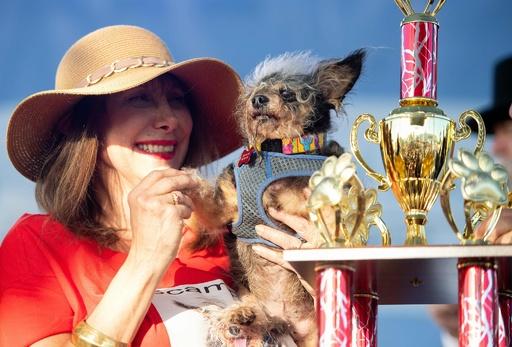 不細工が自慢! 「世界一醜い犬コンテスト」 米カリフォルニア