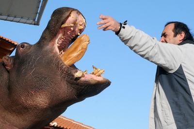 洪水に乗じて逃げたカバ、動物園に戻る モンテネグロ