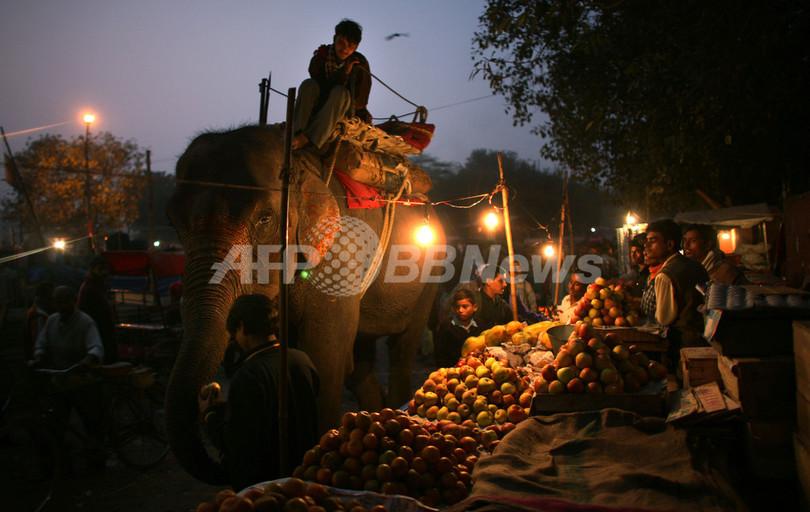 インドでは紀元前15世紀からゾウ...